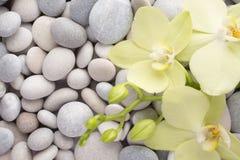 Orchidee Royalty-vrije Stock Foto