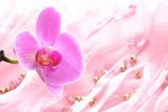 Orchidee 免版税库存照片