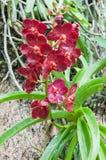 Orchidee Lizenzfreies Stockbild