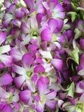 Orchidee Stock Foto's