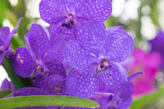 Orchidee Stockbild