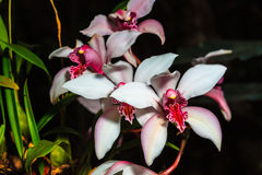 Orchidee stockfotos