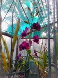 orchidee Fotografia Royalty Free