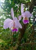 Orchidee Lizenzfreie Stockfotos