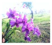orchidee zdjęcia royalty free