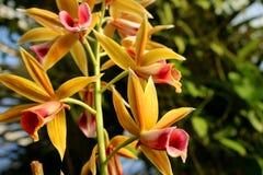 Orchidee Lizenzfreie Stockfotografie
