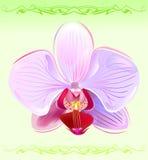 Orchidee stock illustratie