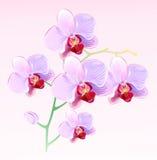 orchidee royalty ilustracja