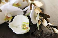 Orchidee adorabili Fotografie Stock Libere da Diritti