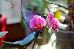 Orchidee adorabili Fotografia Stock Libera da Diritti