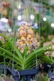 Orchidee arancio dei fiori su caduta Fotografie Stock