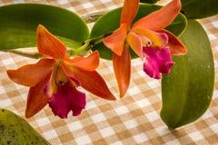 Orchidee arancio sulla tavola nello stile d'annata Fotografia Stock