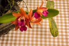 Orchidee arancio sulla tavola nello stile d'annata Fotografia Stock Libera da Diritti
