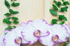 Orchidee auf dem Hintergrund eines hölzernen Brettes mit grünen Niederlassungen Stockfotografie