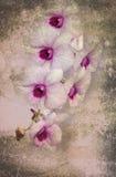 Orchidee auf dem schwarzen alten Designbild und Weinlese blüht Stockfotos