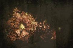 Orchidee auf dem schwarzen alten Designbild und Weinlese blüht Stockfotografie