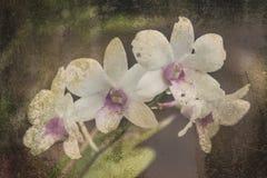 Orchidee auf dem schwarzen alten Designbild und Weinlese blüht Lizenzfreies Stockfoto