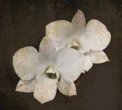 Orchidee auf dem schwarzen alten Designbild und Weinlese blüht Stockbild