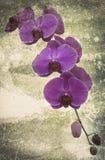 Orchidee auf dem schwarzen alten Designbild und Weinlese blüht Lizenzfreie Stockbilder