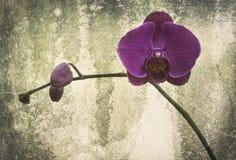 Orchidee auf dem schwarzen alten Designbild und Weinlese blüht Stockbilder