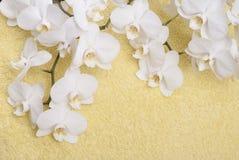 Orchidee auf einem gelben Hintergrund Stockfotos