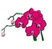 Orchidee auf einer weißen Hintergrundillustration vektor abbildung