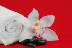 Orchidee-Badekurort-Bildschirmanzeige Stockfotos