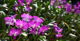 Orchidee-Baumschule Lizenzfreies Stockbild