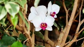 Orchidee bianche nel giardino video d archivio