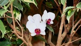 Orchidee bianche nel giardino archivi video