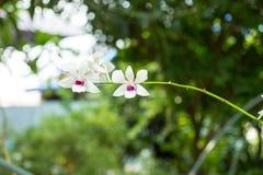 Orchidee bij tuin Stock Fotografie