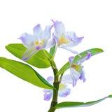 Orchidee blüht Niederlassung Stockbilder