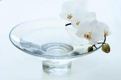 Orchidee in blauwe vaas Stock Foto