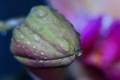 Orchidee, bloem, bloei, Stock Foto