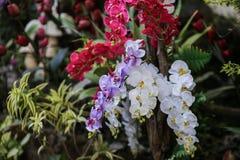 Orchidee-Blume in Thailand lizenzfreies stockbild