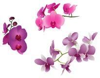 Orchidee-Blumen Stock Abbildung