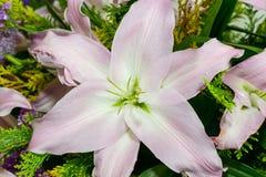 Orchidee, Blumenblätter des Rosaweiß 6 groß in der Fauna Stockfoto