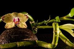Orchidee con coccnut Fotografie Stock Libere da Diritti