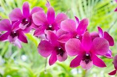Orchidee con il fondo verde della foglia Fotografie Stock Libere da Diritti