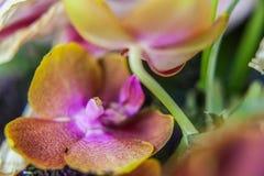 Orchidee da ammirare Immagine Stock