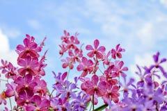 Orchidee in de tuin stock foto