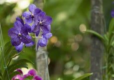 Orchidee in de wildernis Royalty-vrije Stock Afbeelding