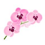 Orchidee del ramo Fotografia Stock Libera da Diritti