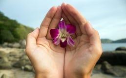Orchidee in den Händen Lizenzfreie Stockfotos