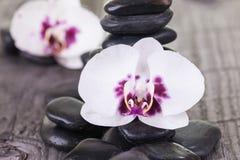 Orchidee di lepidottero bianche e pietre nere sulla piattaforma stagionata Immagini Stock