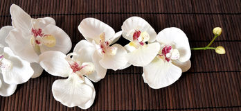 Orchidee di Wellness Fotografie Stock