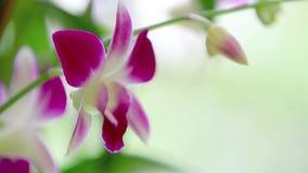 Orchidee, die in Grün verblaßt stock video