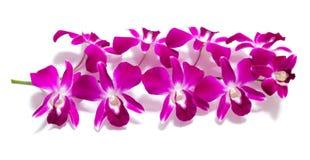 Orchidee die op wit wordt geïsoleerdo Stock Afbeelding