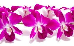 Orchidee die op wit wordt geïsoleerdo Stock Foto's