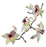 Orchidee die op witte achtergrond wordt geïsoleerda Royalty-vrije Stock Afbeeldingen